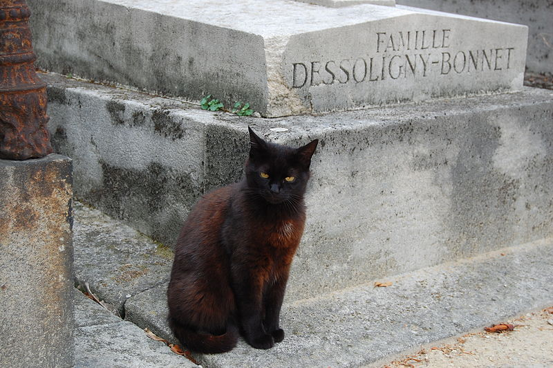 800px-cat_-_pere_lachaise_cemetery_-_03