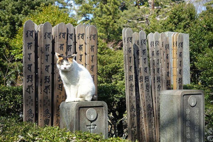 cemetery_cat_-_gokokuji_-_bunkyo_tokyo_japan_-_dsc07832